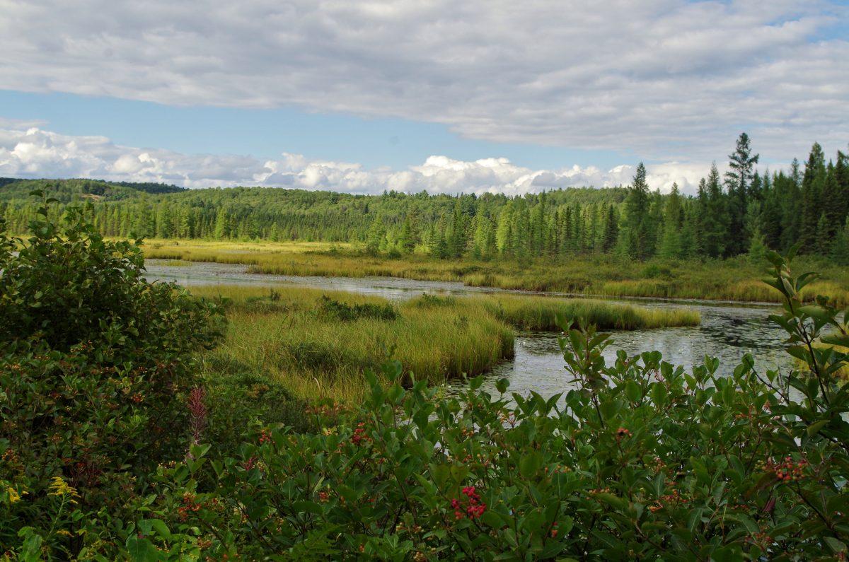 Exploring Wildlife in Ottawa Area - Holarctic Bridge